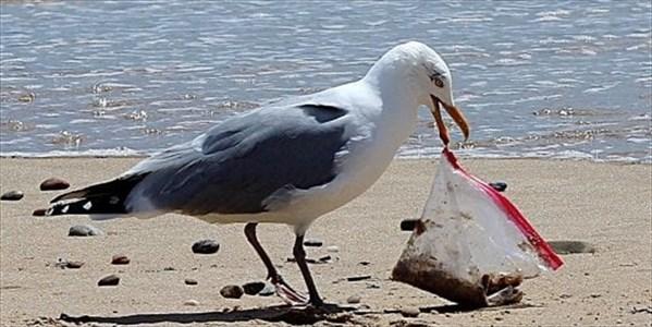 Alberto Azario - La lotta alla plastica, dall'Europa al Giappone, non conosce confini nazionali
